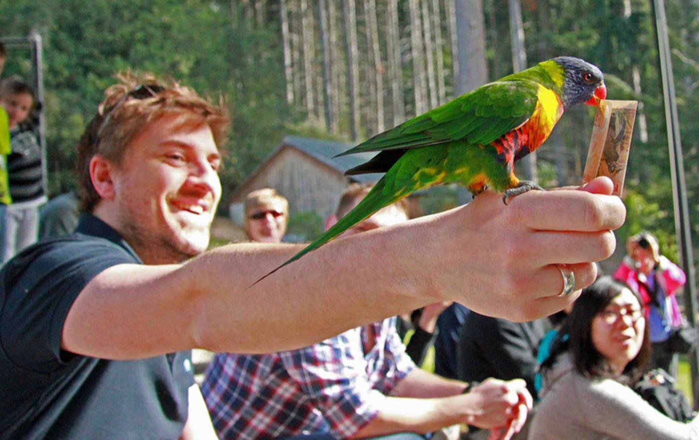 Kiwi Birdlife Park conservation show parakeet