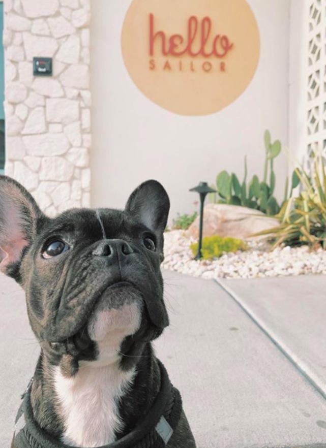 French Bulldog at Hello Sailor Restaurant