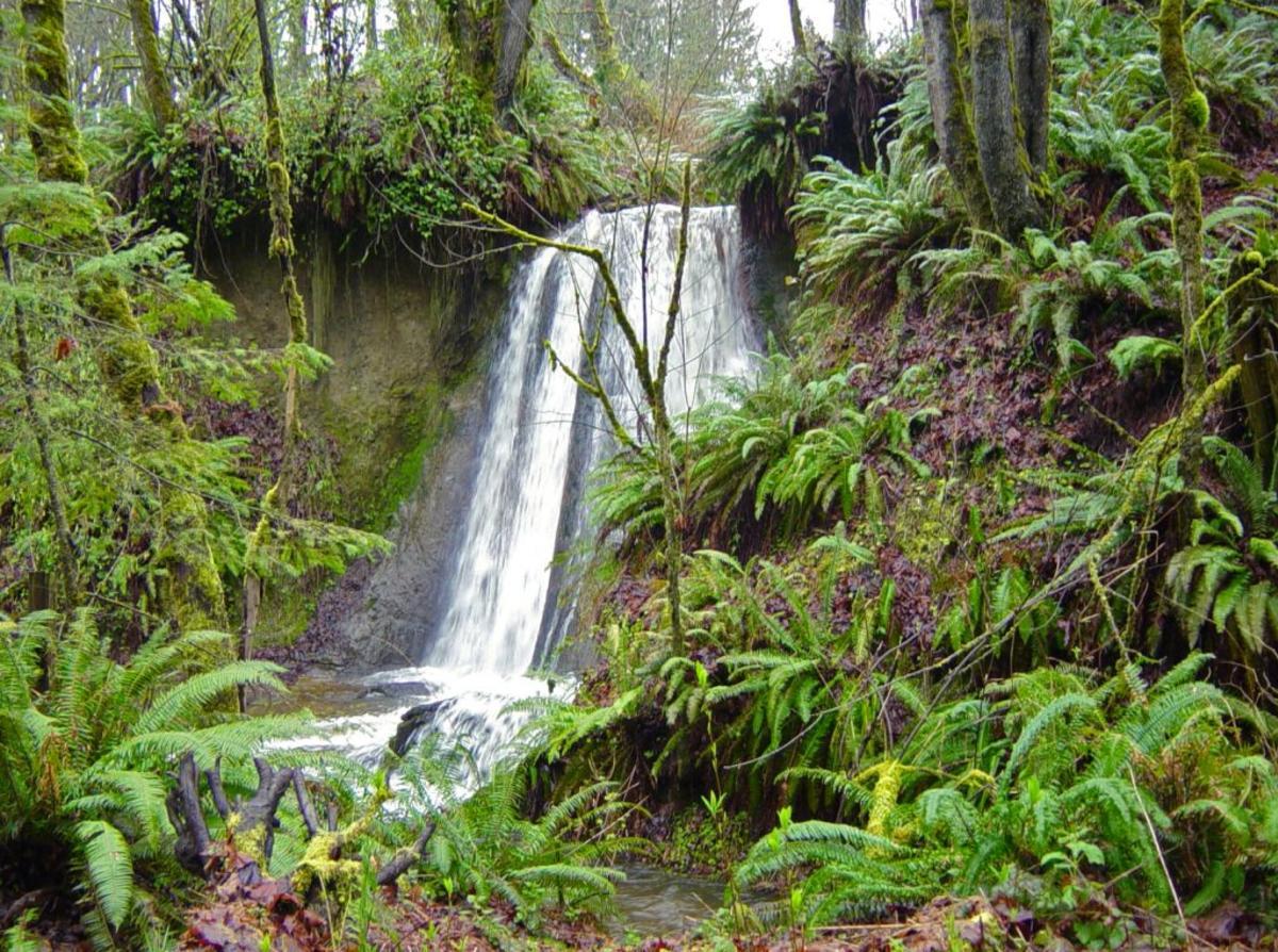 Bellevue Parks Coal Creek Trail Waterfall
