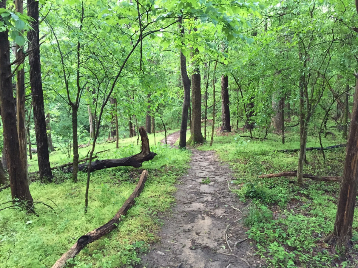 Pritchard Park Library Trail, Chapel Hill