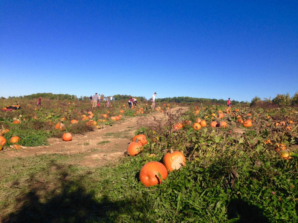 Paulus Orchards Pumpkin Patch