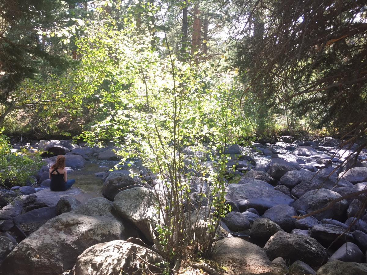 forest bathing melissa martin