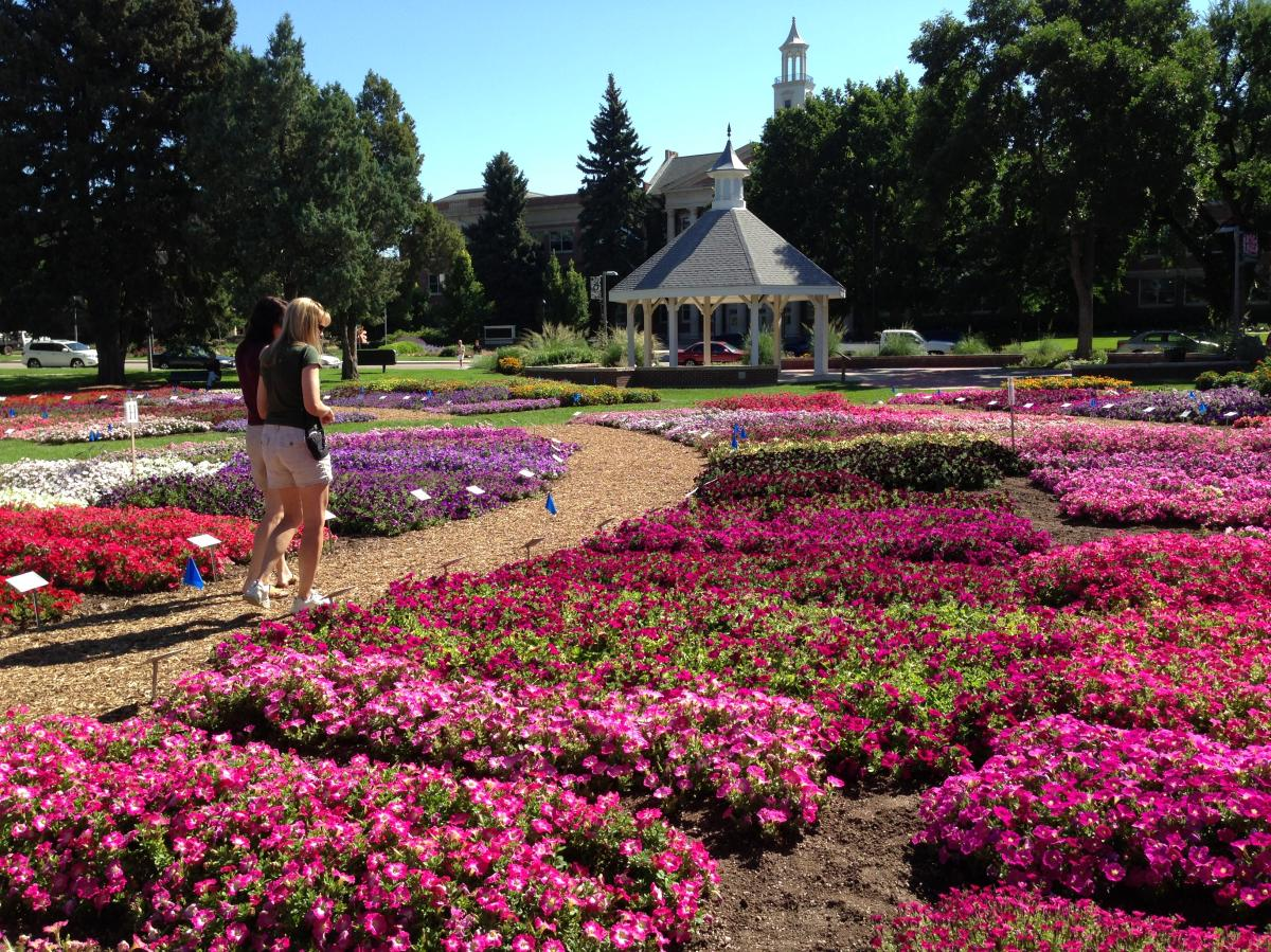 CSU Flower Trial Garden