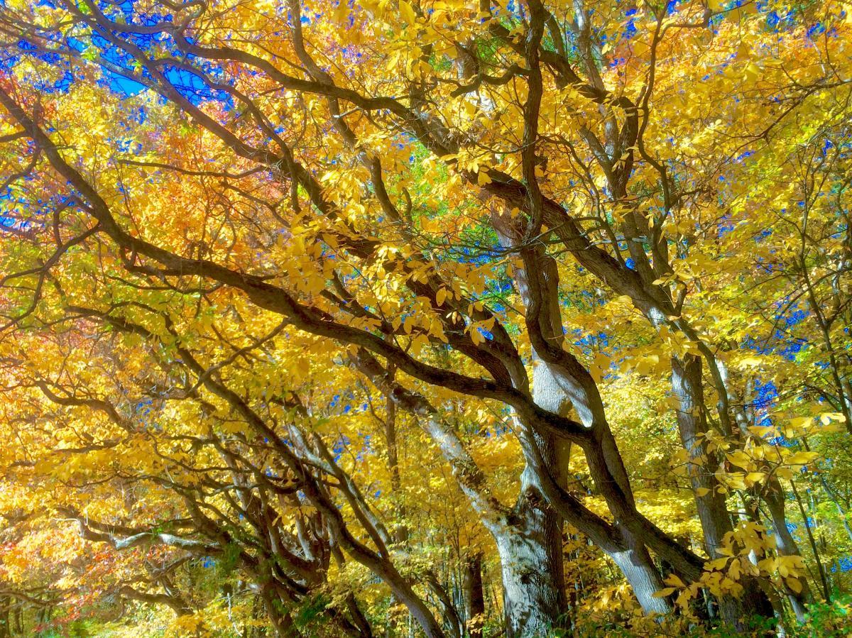 Fox Island Leaves in Autumn