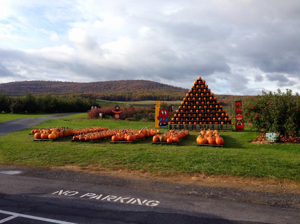 Pumpkin display at the Catoctin Mountain Orchard