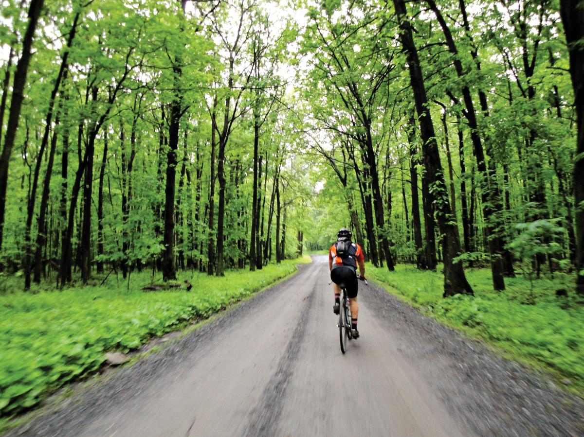 Person biking on a trail at the Gambrill State Park