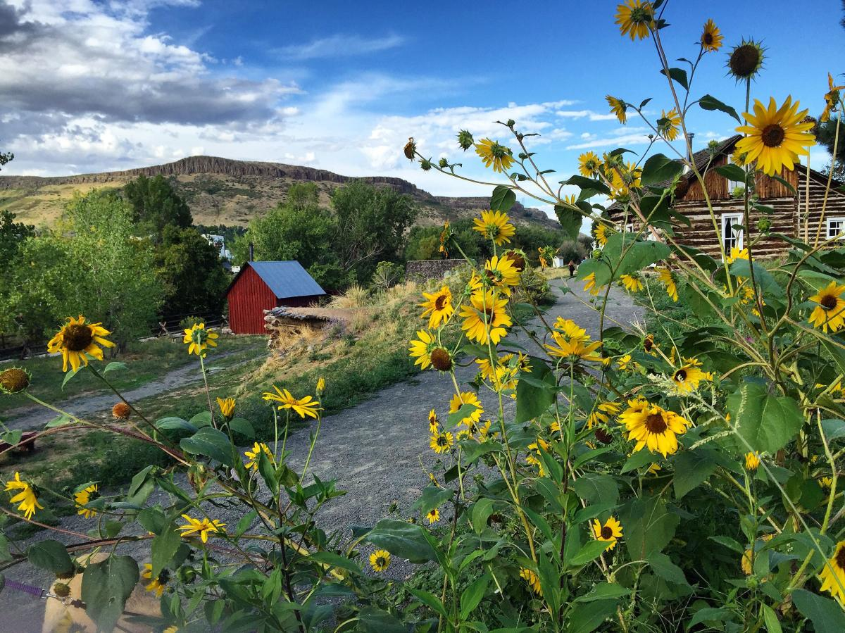 Golden History Park with views of historic buildings, Black-eyed Susans and Clear Creek