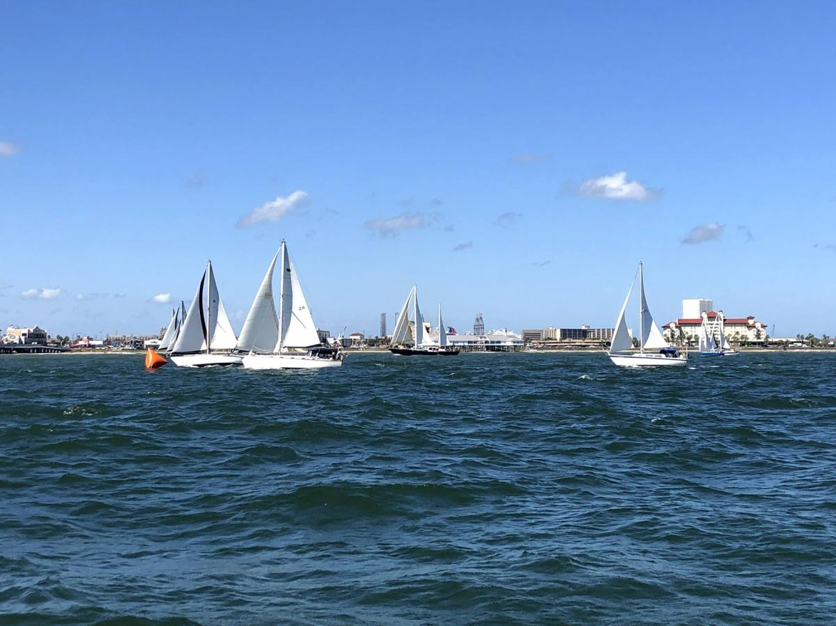 A group of sailboats with white sails in water on a near-cloudless day