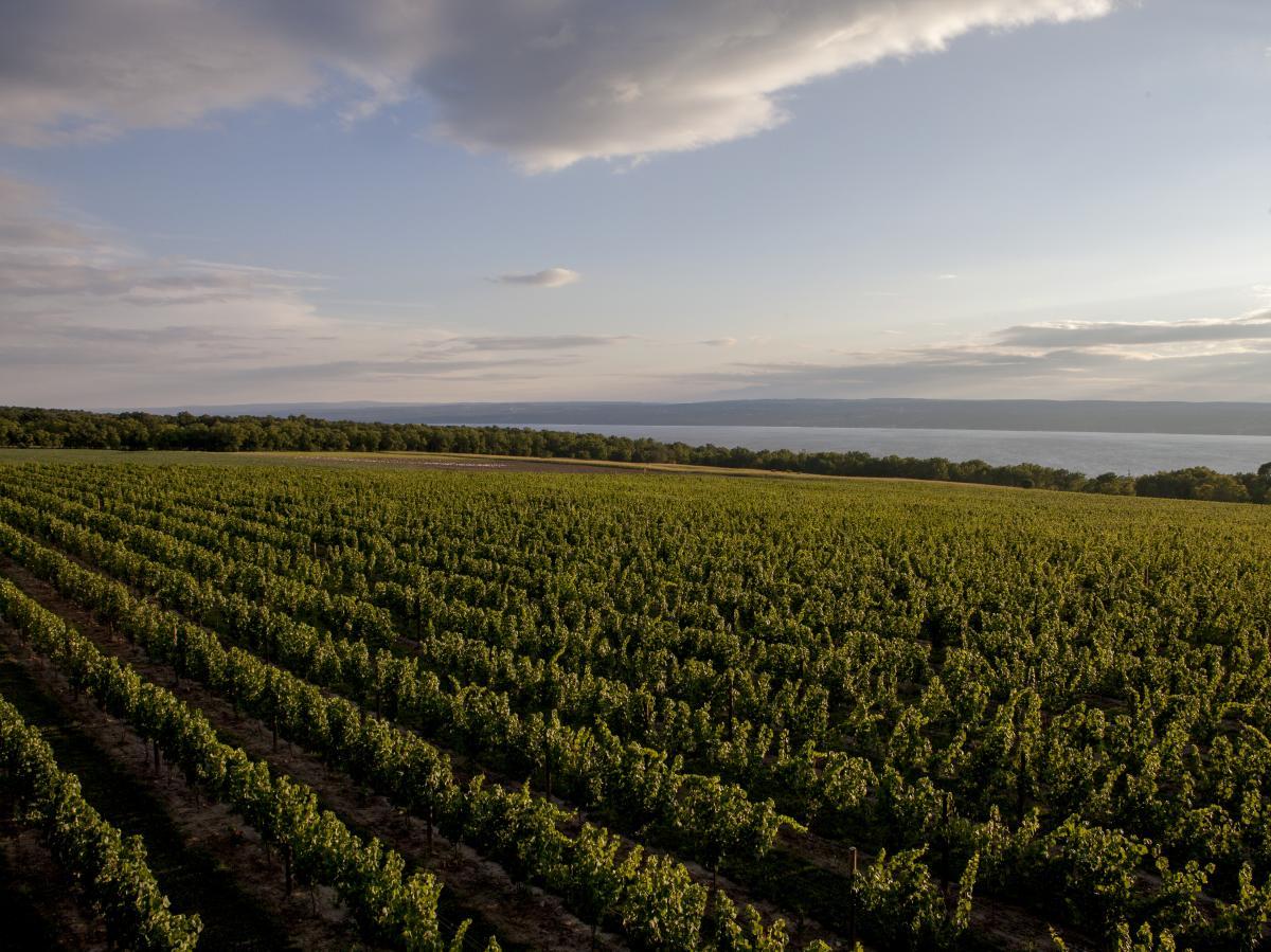 Breathtaking view of Boundary Breaks Vineyards