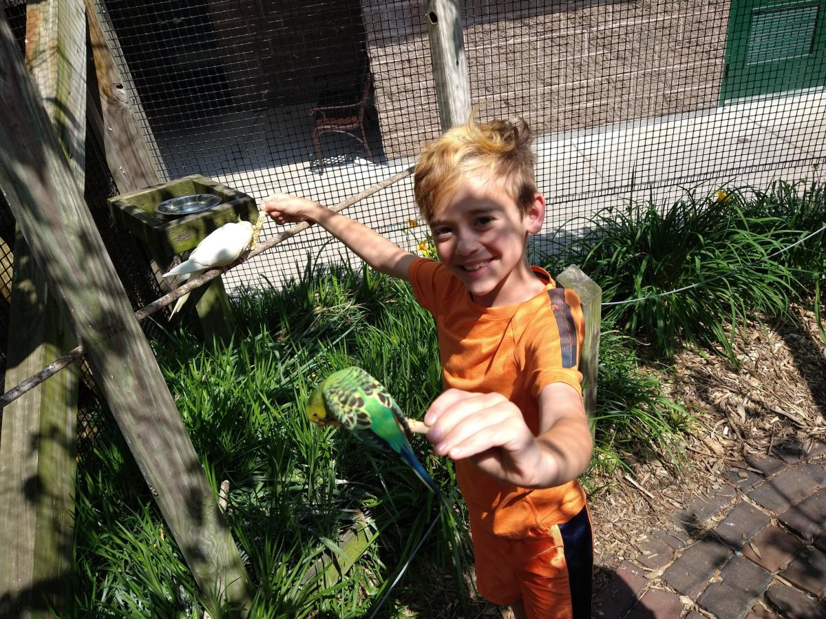 Yes Day in NWI - Washington Park Zoo birds