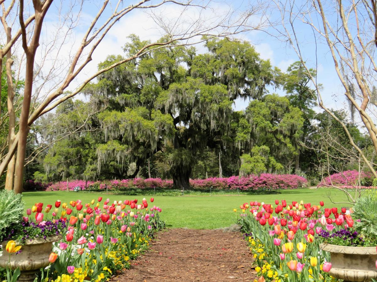 Airlie Gardens Tulips