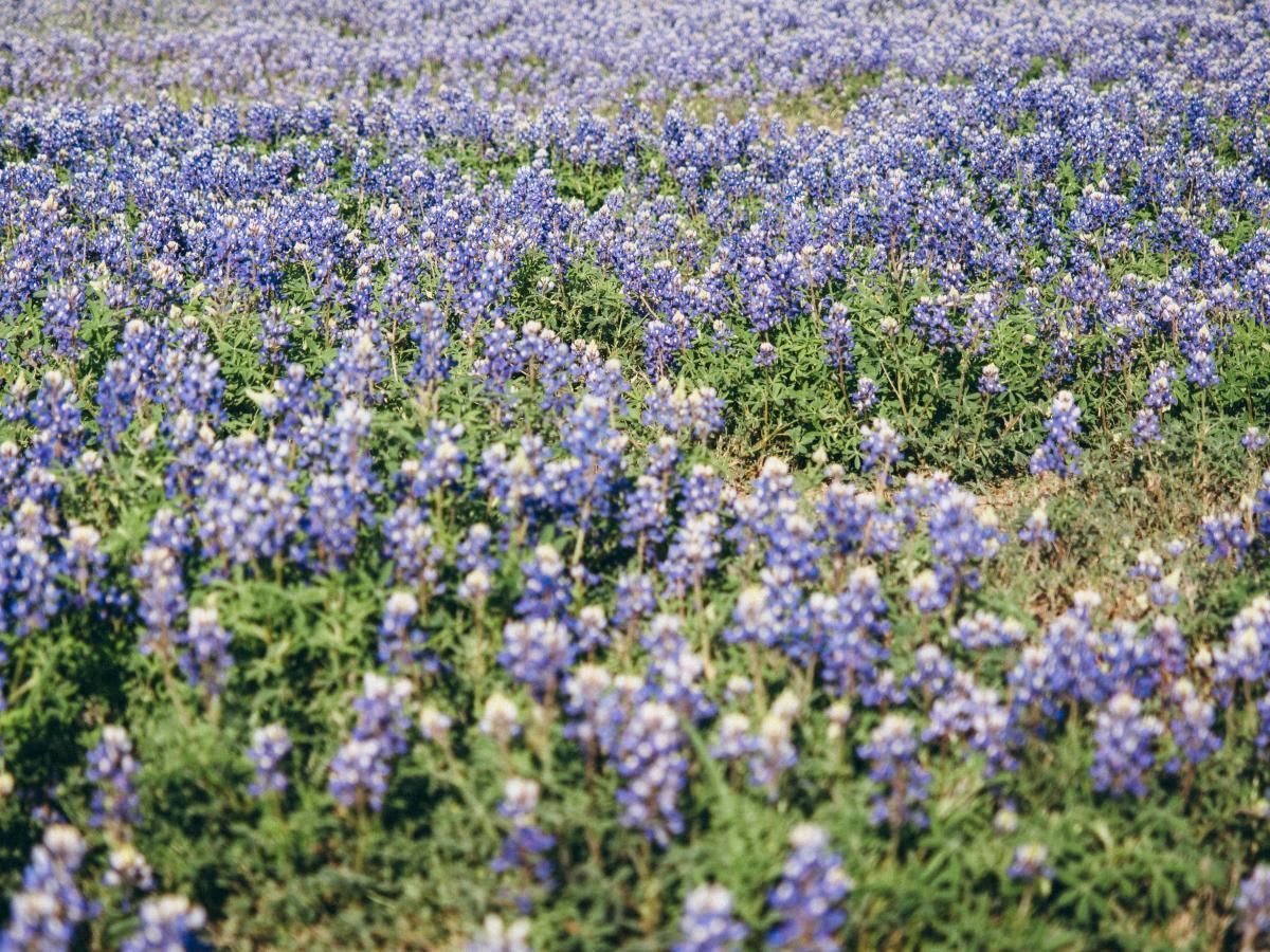 Shutterstock flowers