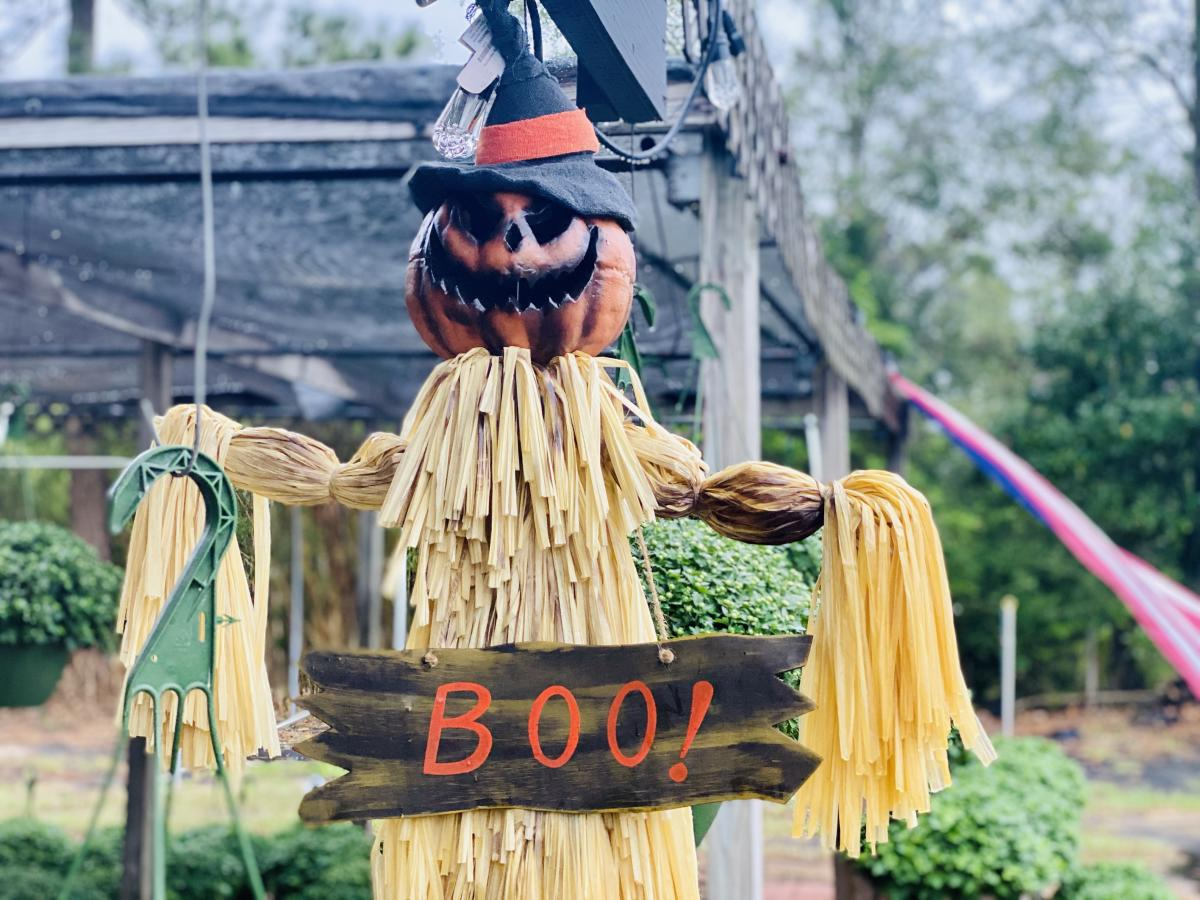 Scarecrow with a pumpkin head wearing a witches hat and a Boo sign