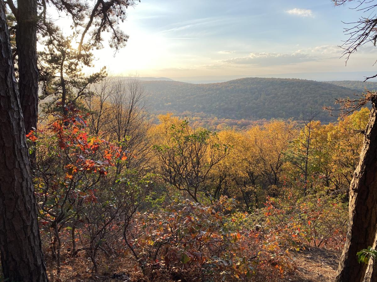 Hilltop View Of A Forest At King's Gap In The Cumberland Valley