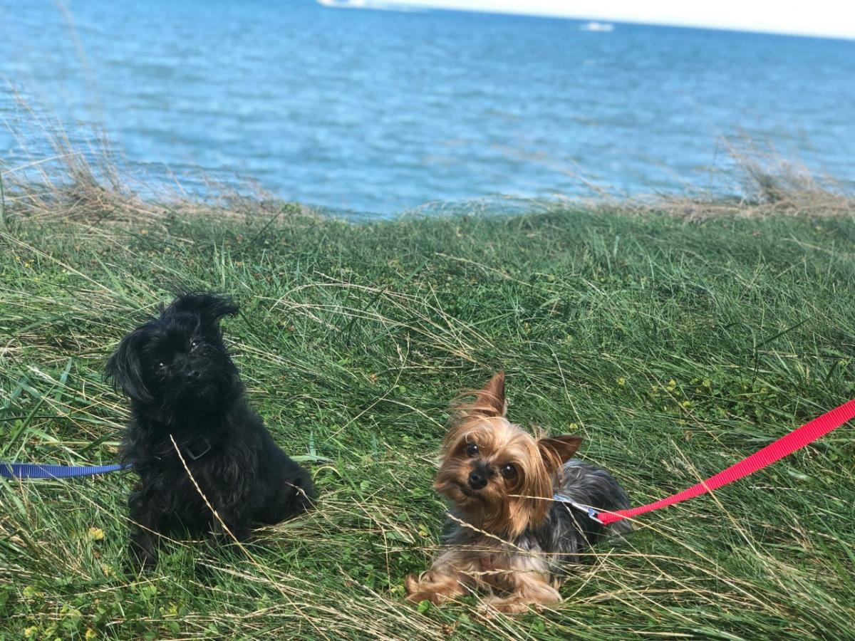 cute dogs on the lake in Finger Lakes Wine Country