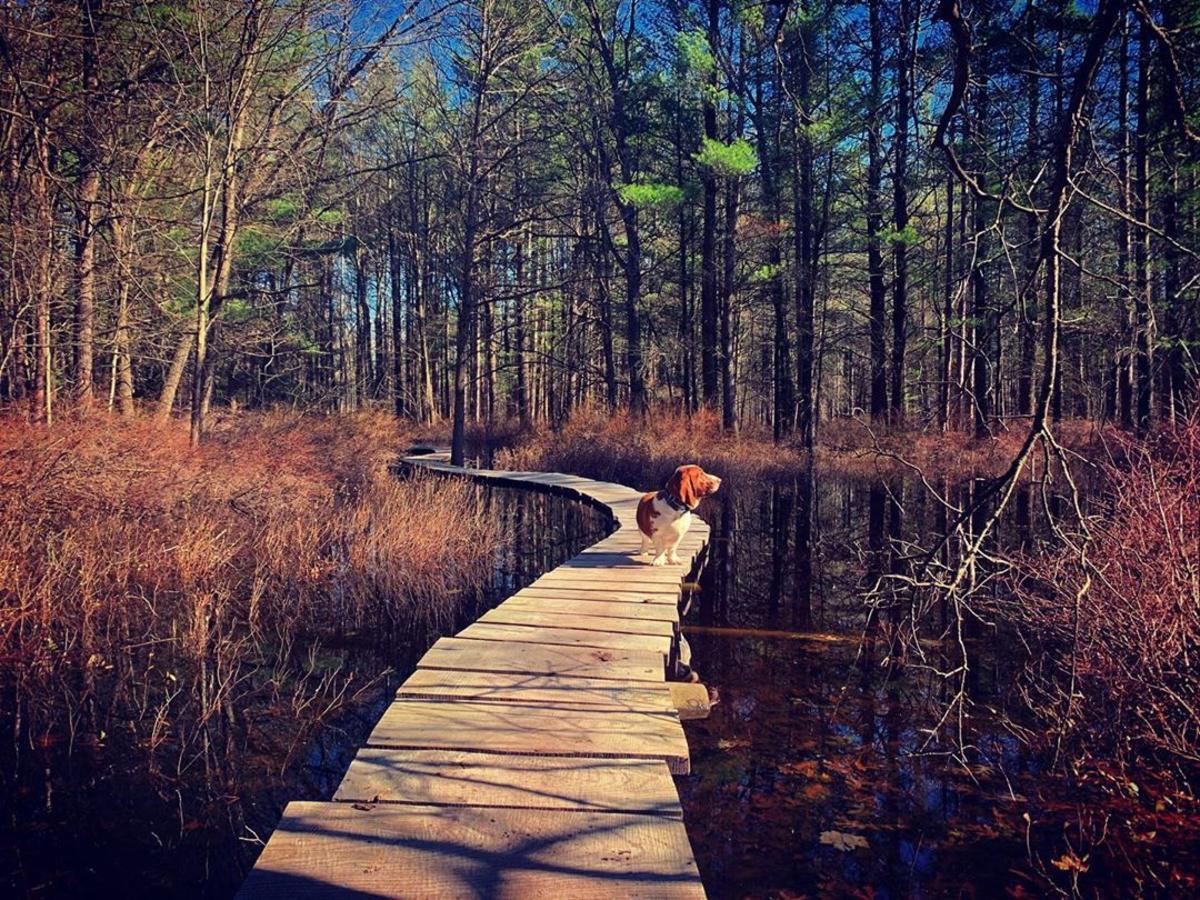 UGC - Top Fall - Dog on Midland Trails