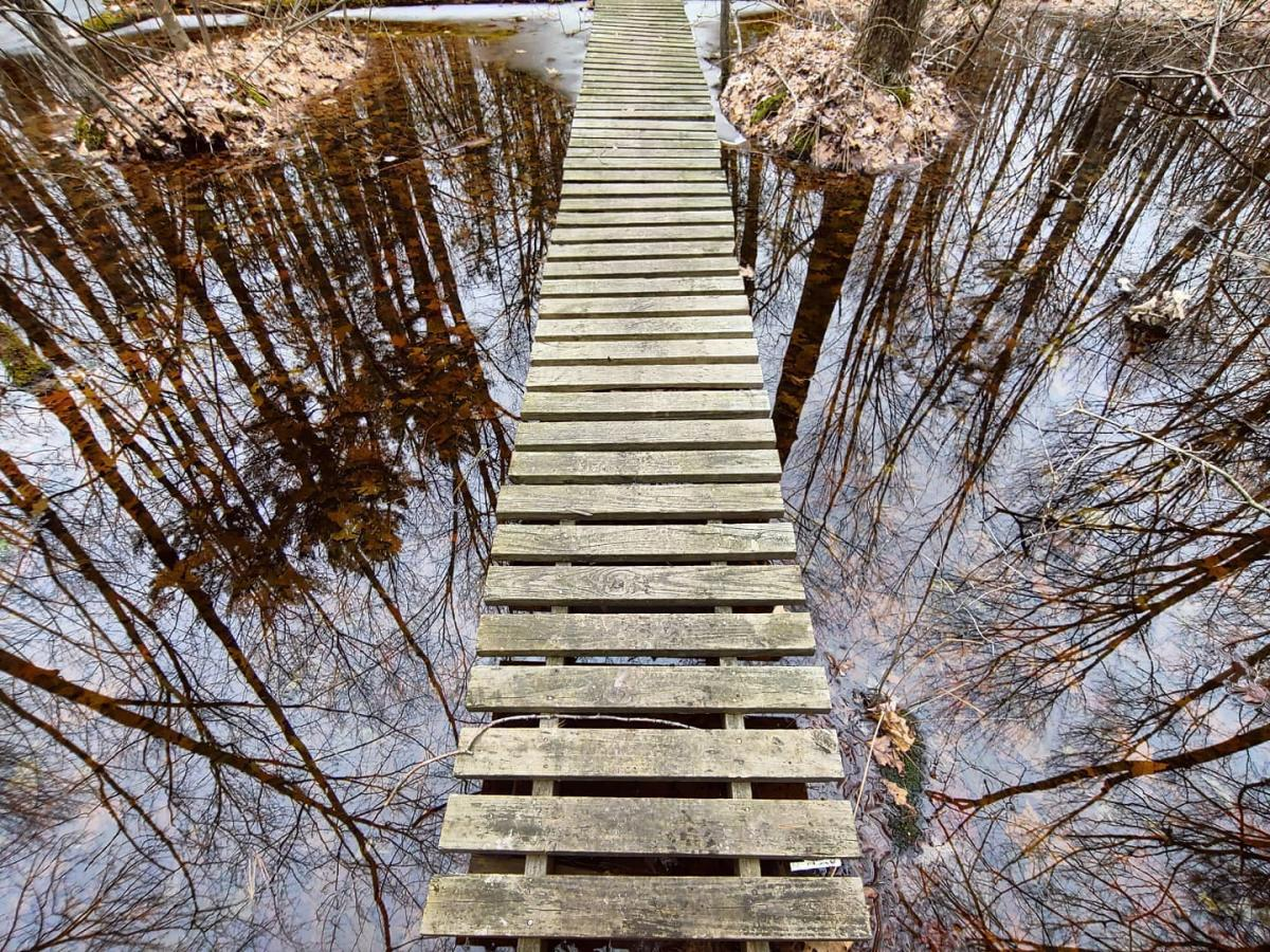 View of trees reflected on the water from a wooden boardwalk at Pine Haven Recreational Area