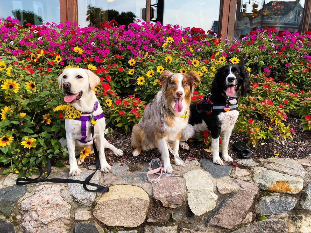 Three dogs sitting on the rocks with flowers behind them in Frankenmuth