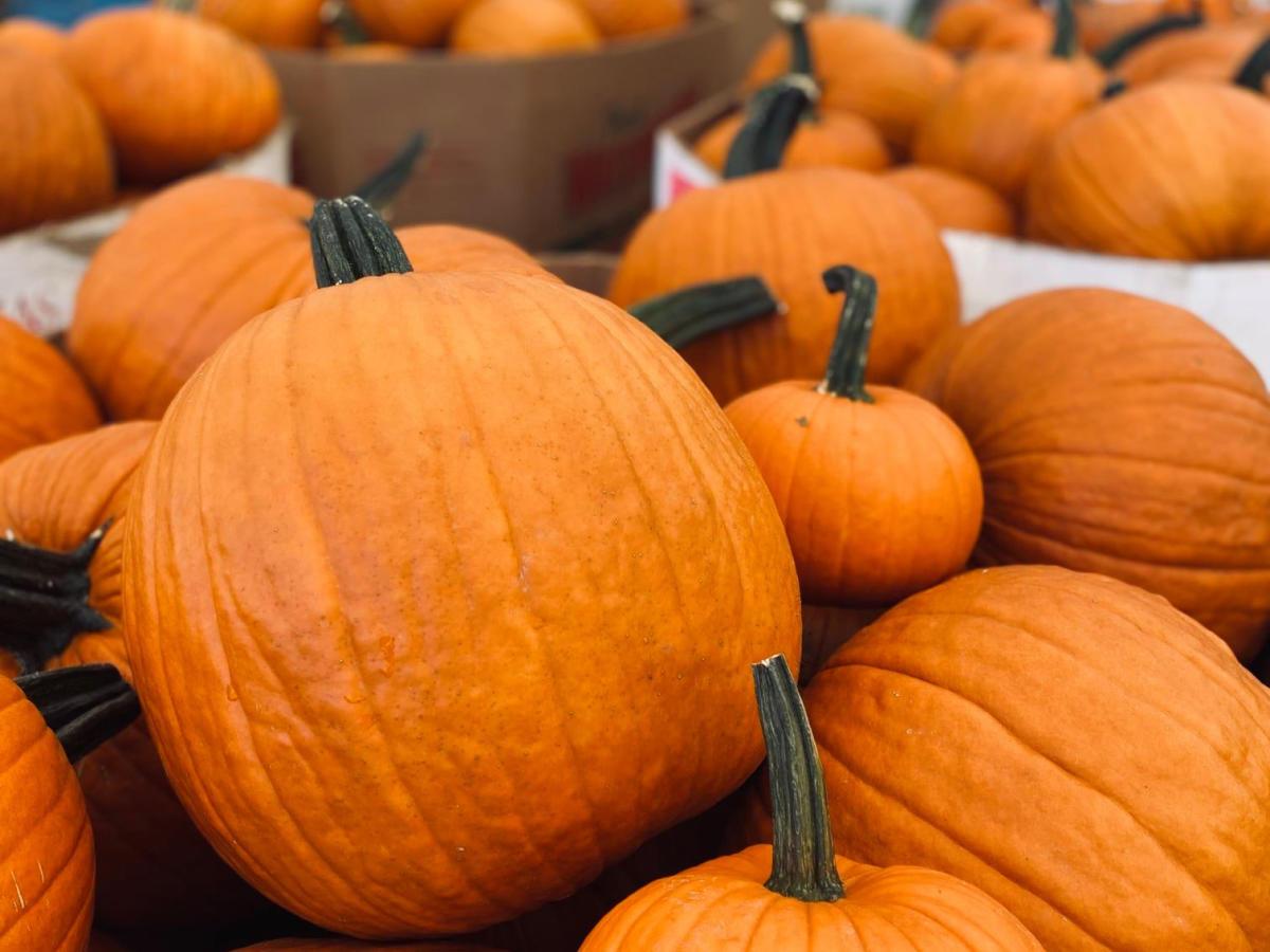 Mary's Amazing Pumpkins