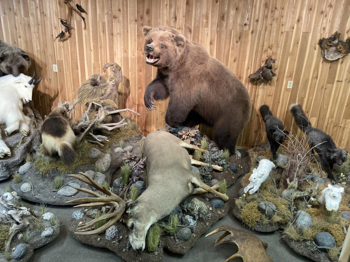 Canadian Wildlife Museum