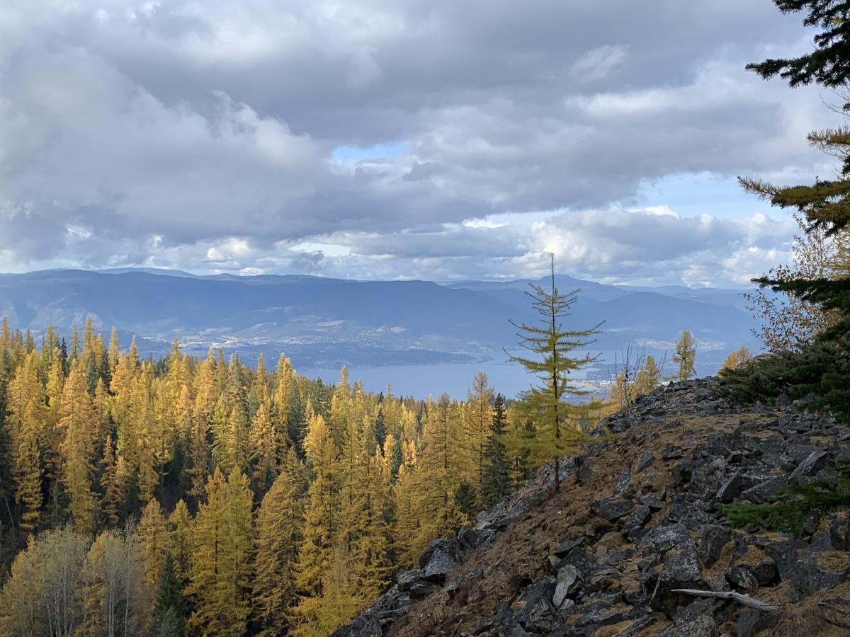 View from KVR near the Boulderfields in fall with yellow needles on the larch trees