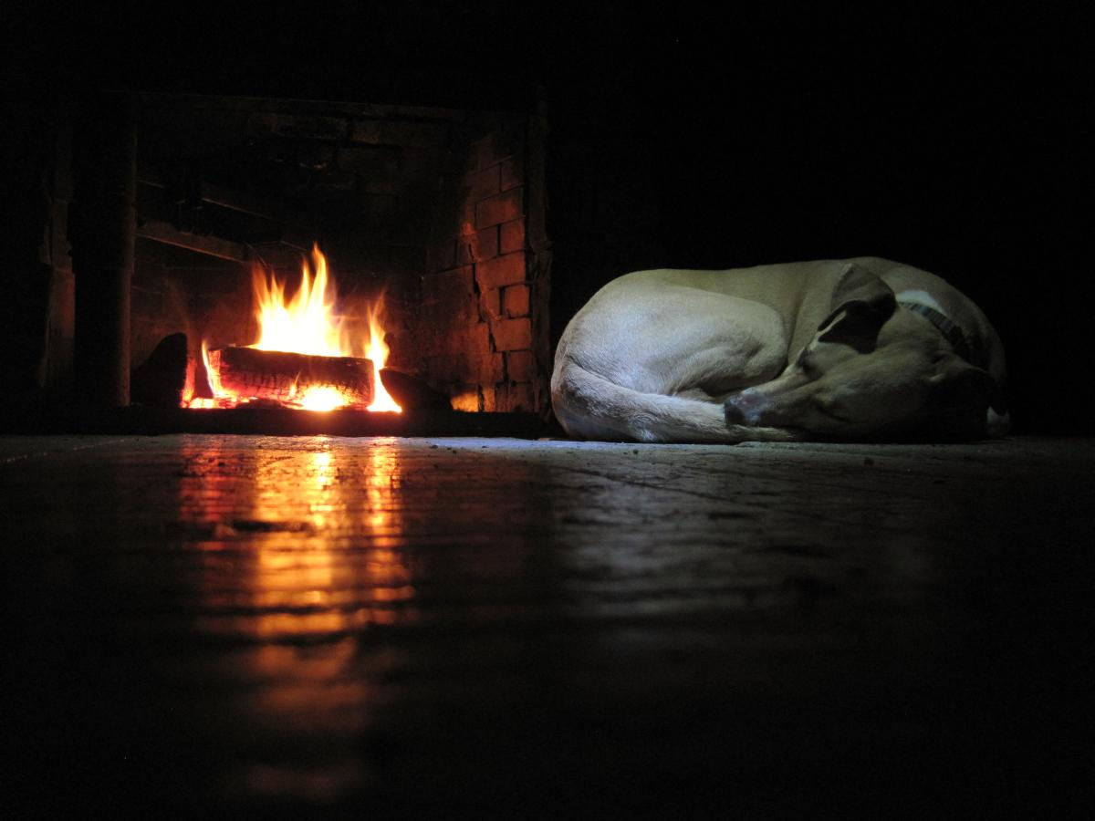 Man's Best Friend snoozes by fire at LHHT shelter