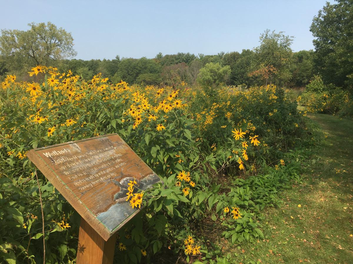 Flowers line a trail at Aldo Leopold