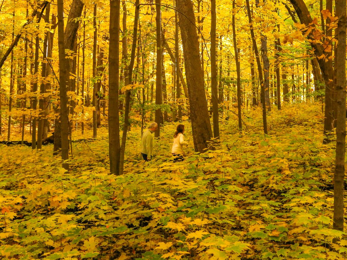 Two people hike through woods filled with fall colors