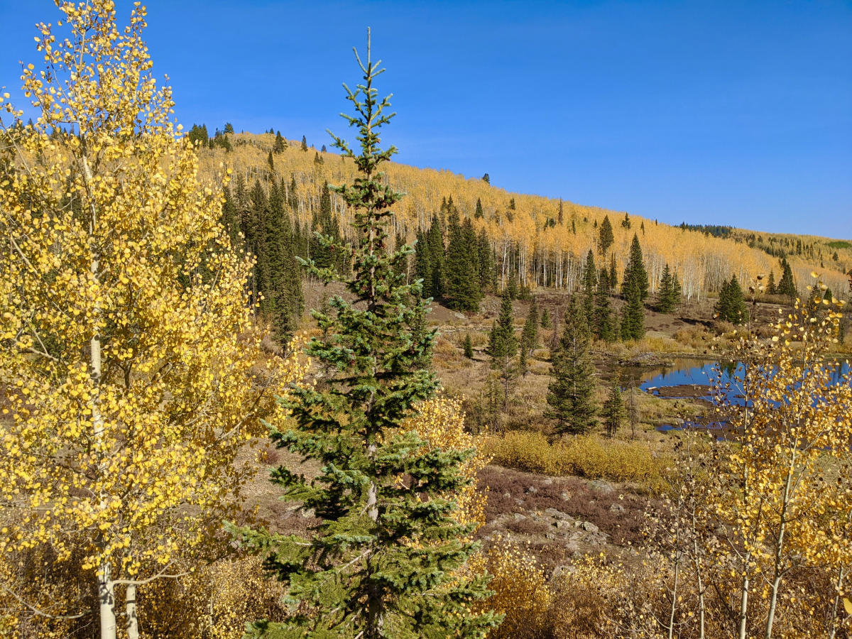 Fall colors on the Grand Mesa with a pond and pine trees