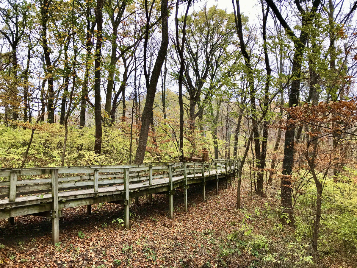 Fontenelle Forest in fall