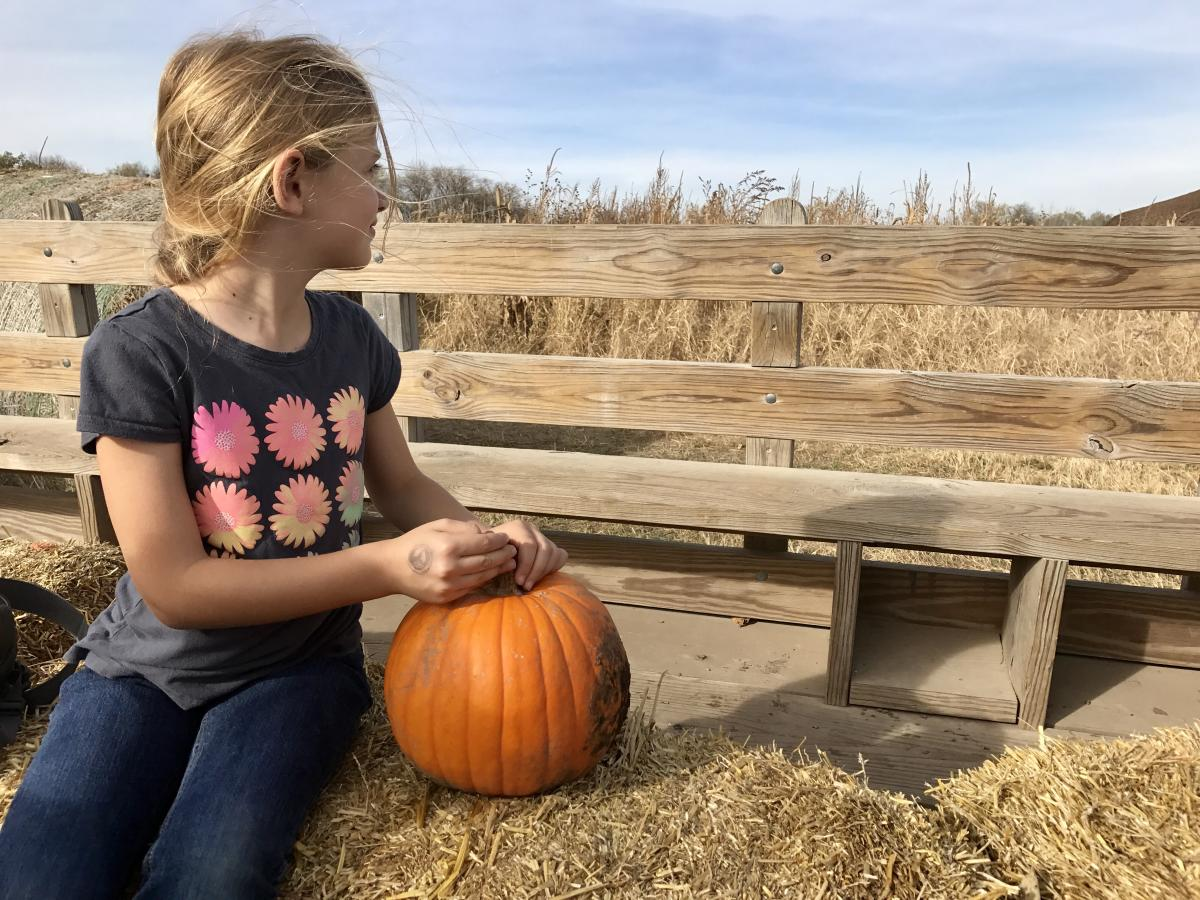 hay rack ride with pumpkin at Bellevue Berry and Pumpkin Ranch