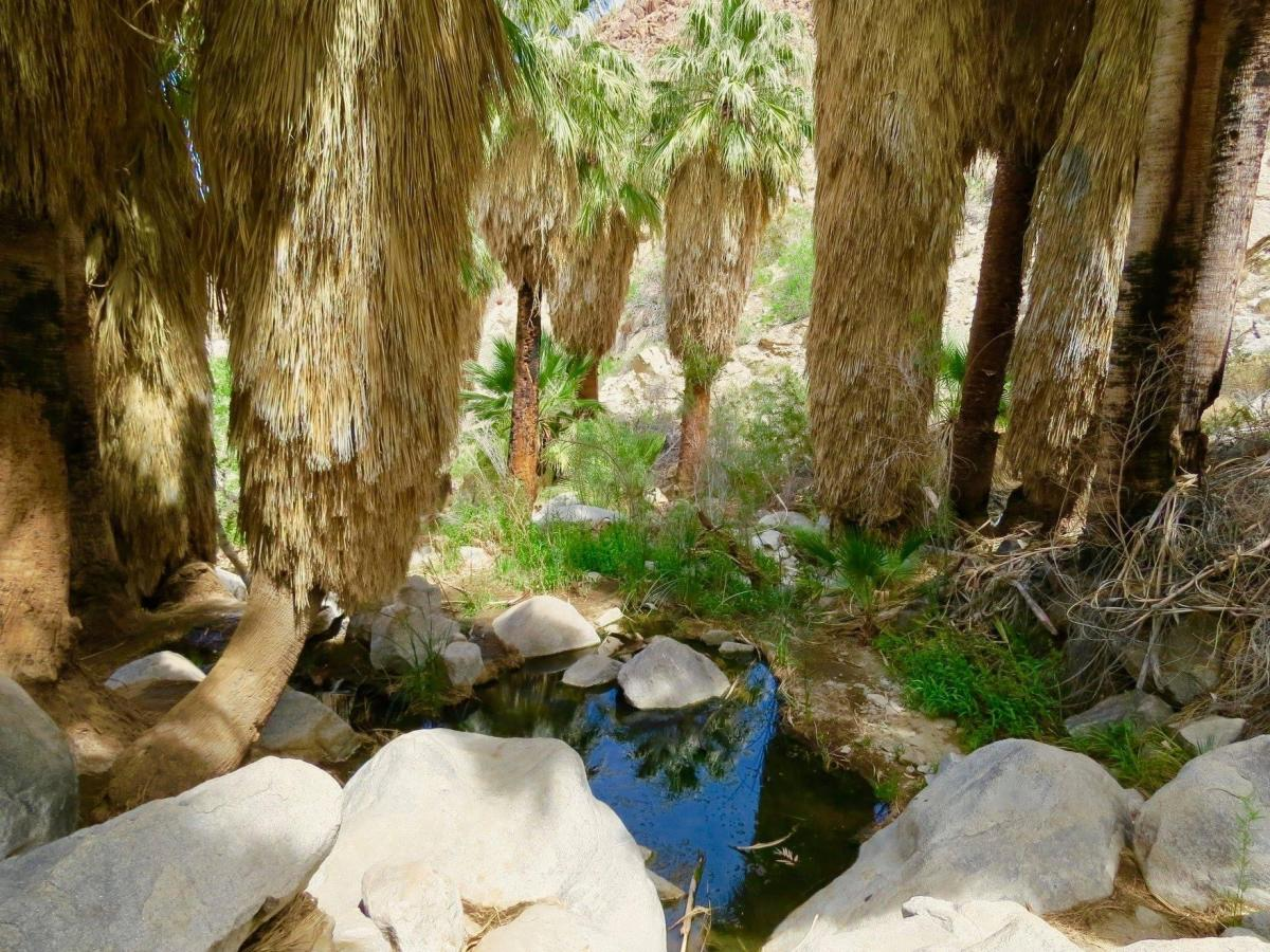 Hiking to an oasis in Greater Palm Springs