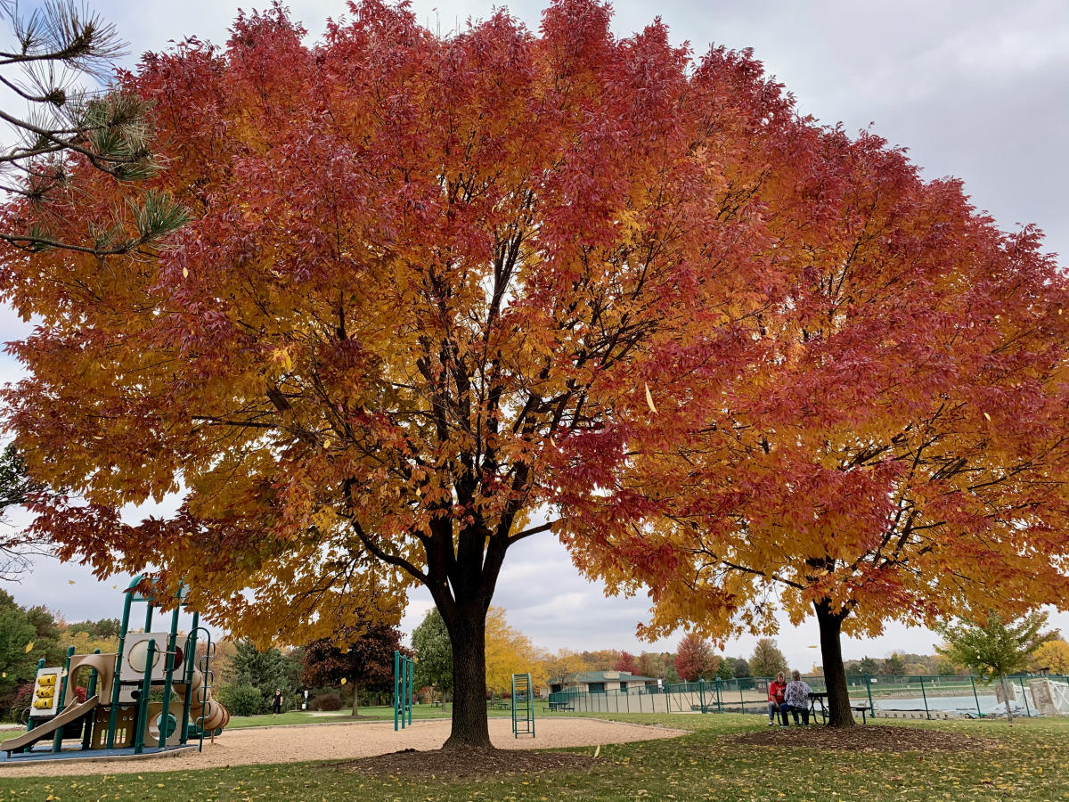 Prairie Springs Park Playground with Vibrant Colorful Leaves in Fall