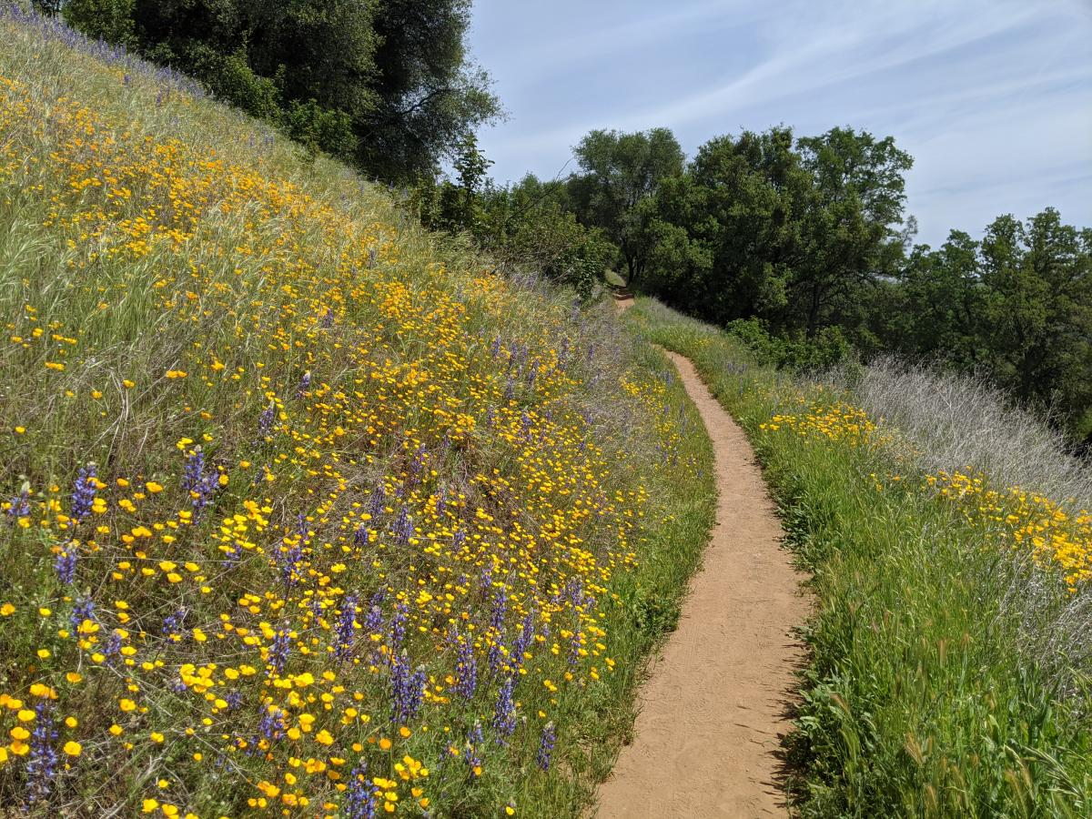 hiking trail with wildflowers along the side