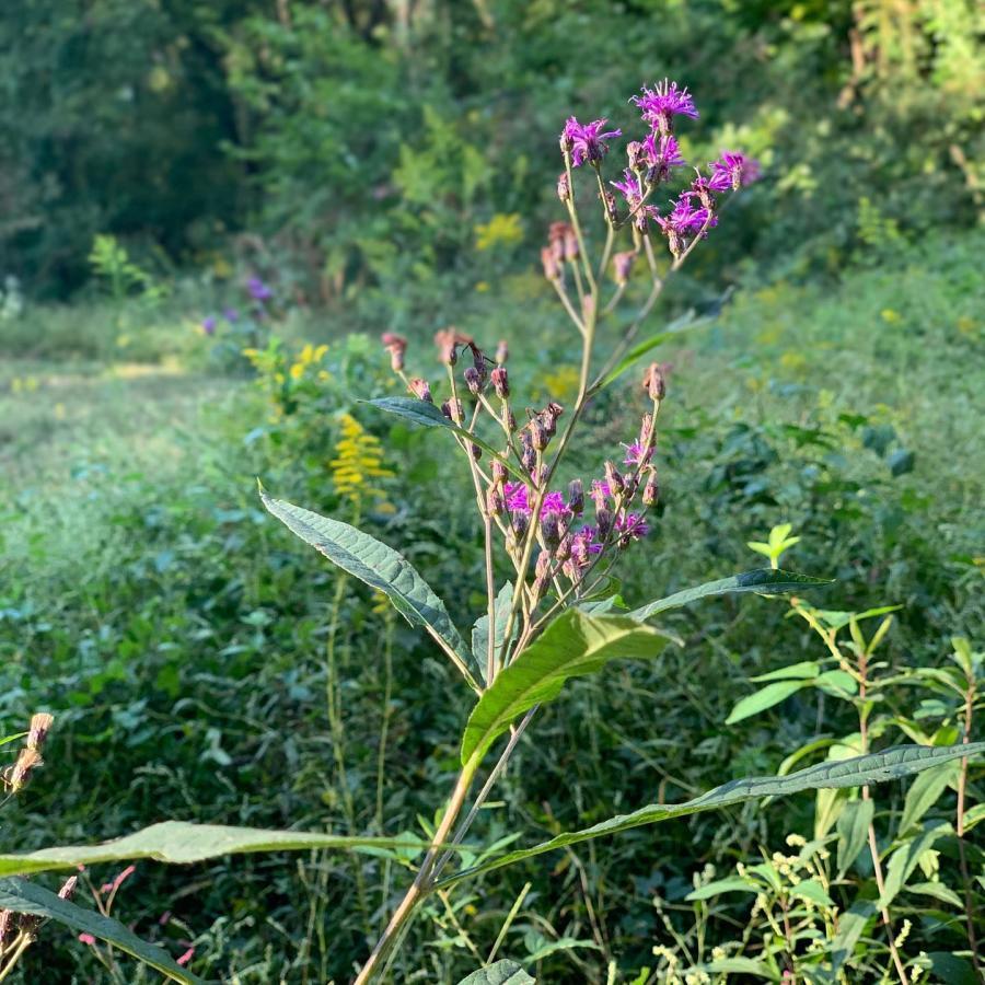 Chapman Mountain Flowers