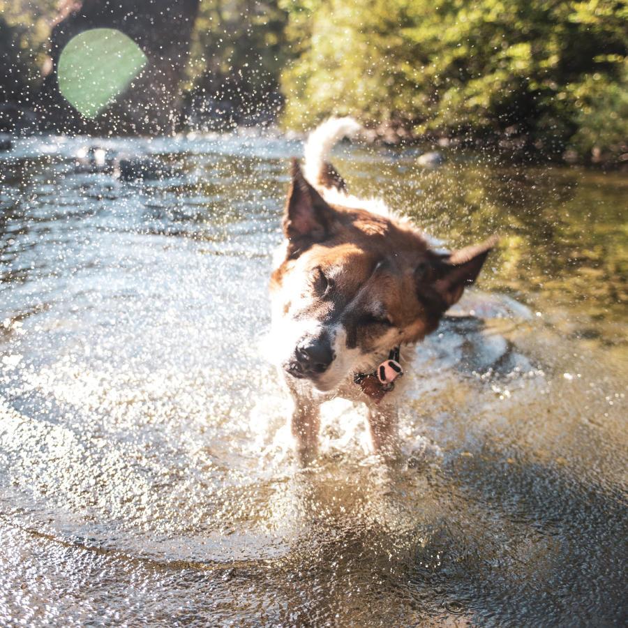 Dog shaking and splashing water in a lake