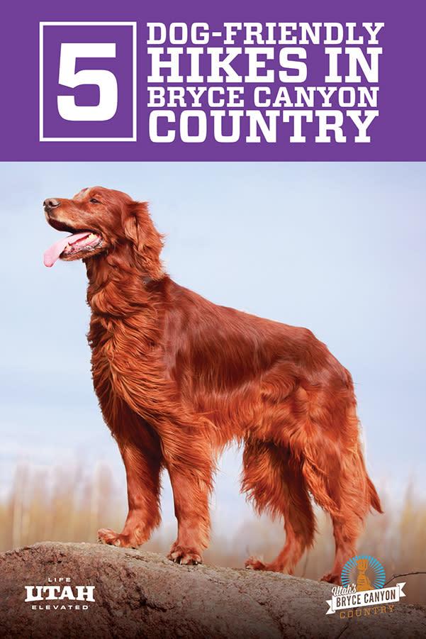 dogs purple