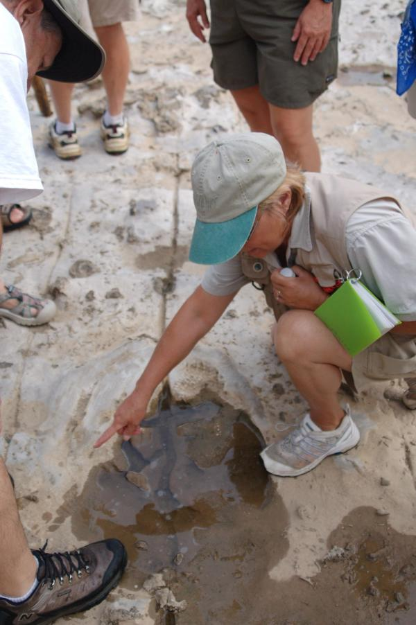 Ranger pointing to fossil