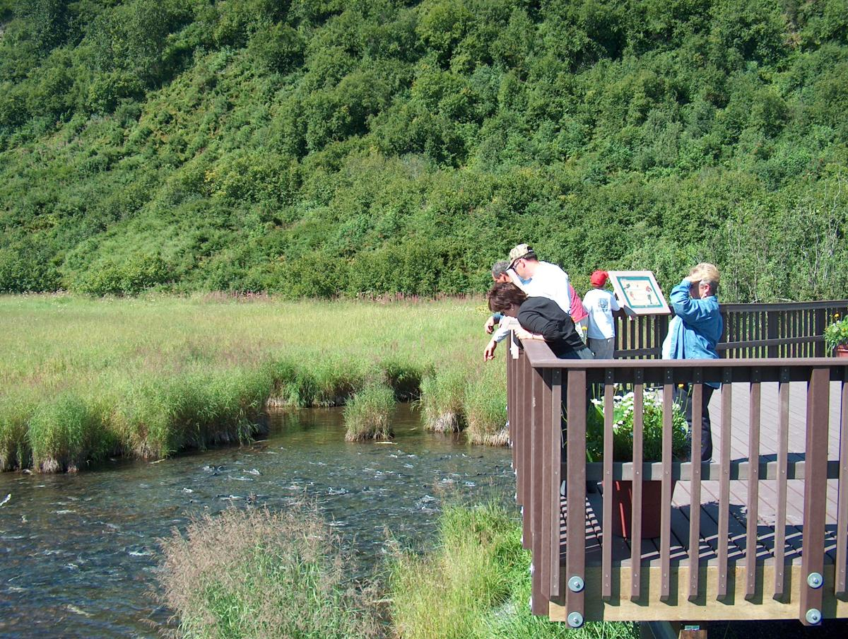 a group of people observe salmon in Crooked Creek