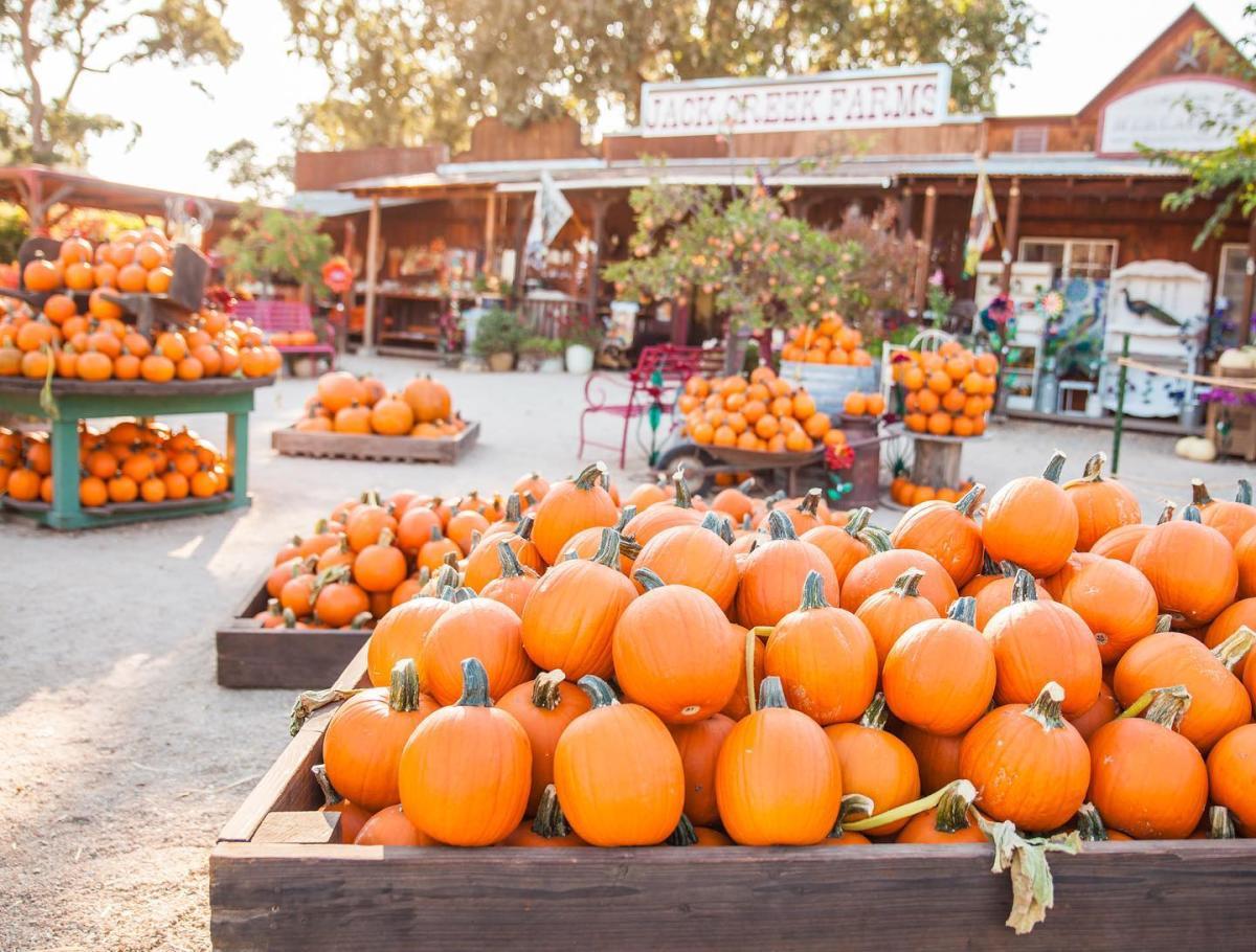 pumpkins at Jack Creek Farms