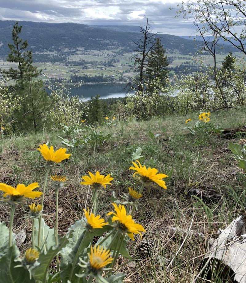 Lisa Kadane - spring Blooms