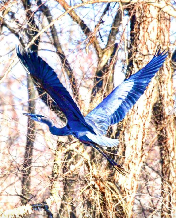 Abbott Marshlands Important Bird Area (IBA)