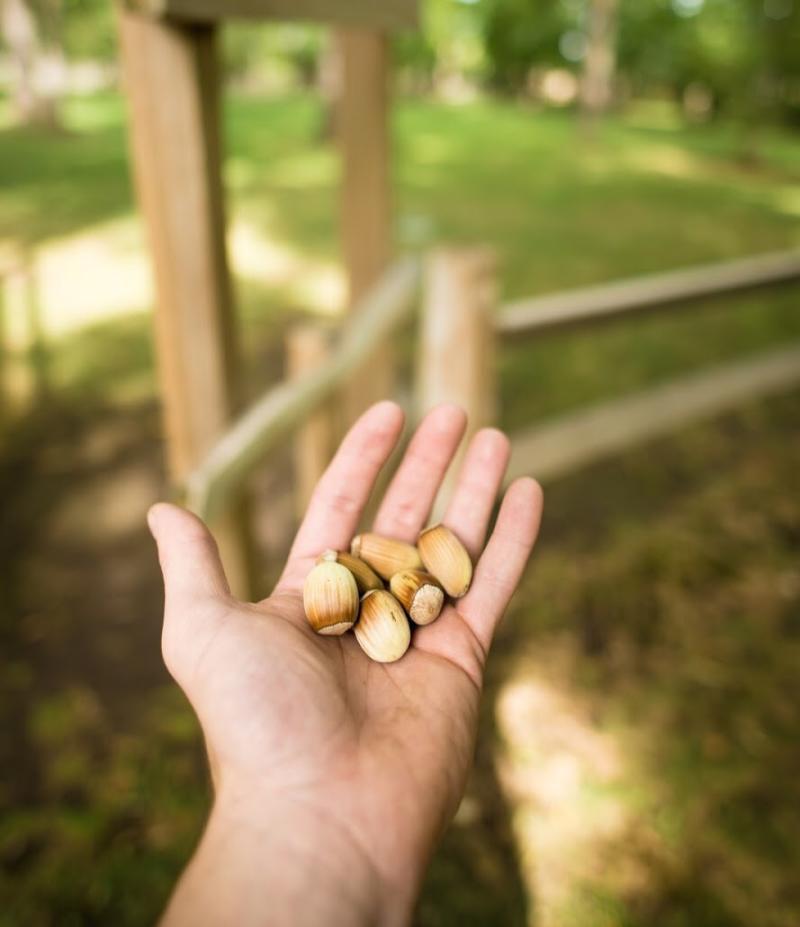 Gellatly Nut Farm Regional Park
