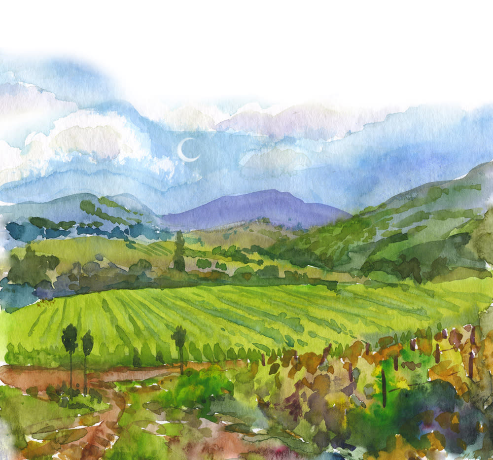 Sonoma vineyards and mountains as a watercolor
