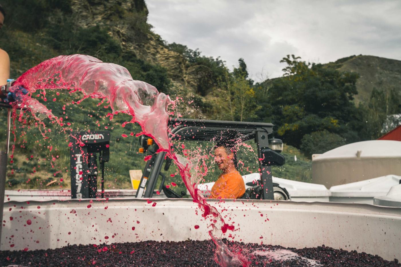 Pinot Harvest at Gibbston Valley Winery