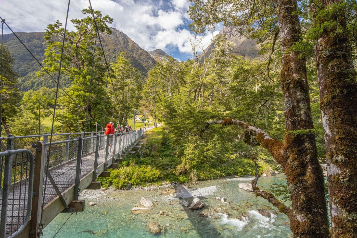 A group walking over a swing bridge in lush bush, over a blue stream