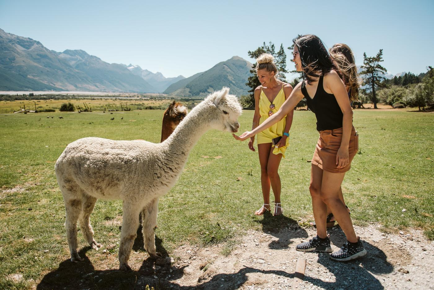 Visiting the Glenorchy Animal Experience with Queenstown Expeditions