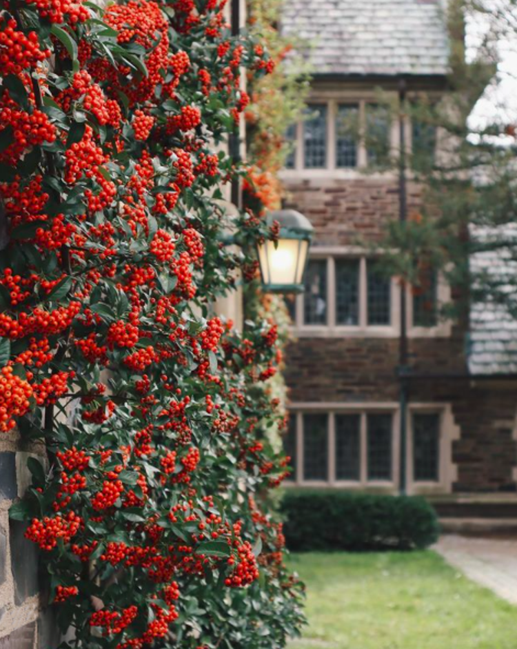 Red flowers on a stone wall with Princeton university in the background
