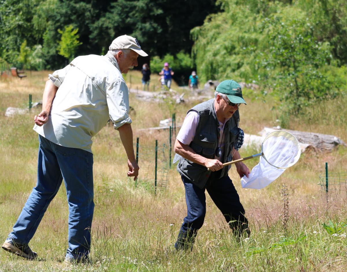 Two men in Juanita Bay looking for bees