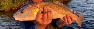 Fishing with King Fisher Fleet, man holding a redfish